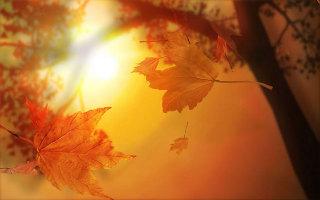 őszi napsütés