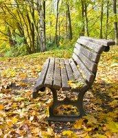 Mozogj a falevelekkel - ősz