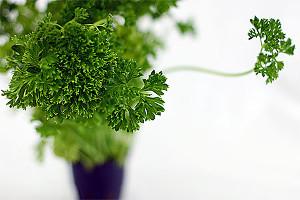 petrezselyem-egészséges