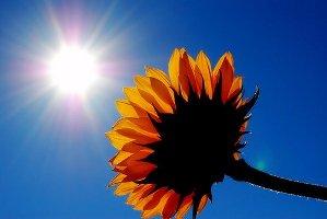 A napfény D vitamin feltöltő hatása