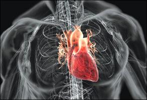 a szív fontossága